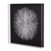 Clear Sea Fan Shadow Box  main image, 1 of 5 images.